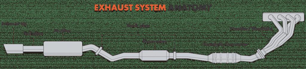 exhaust system anatomy